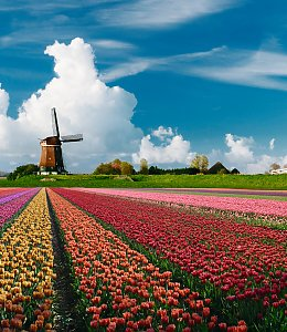 Tulpenblüte in Holland © iStock/JacobH